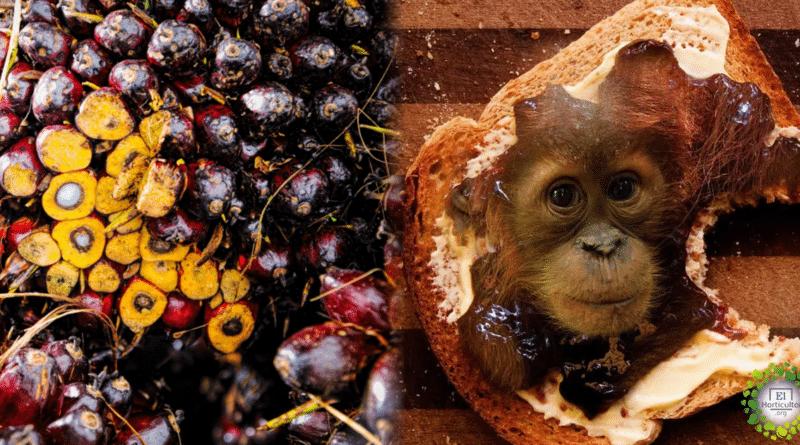 , Noruega es el primer país en prohibir el biocombustible a base de aceite de palma