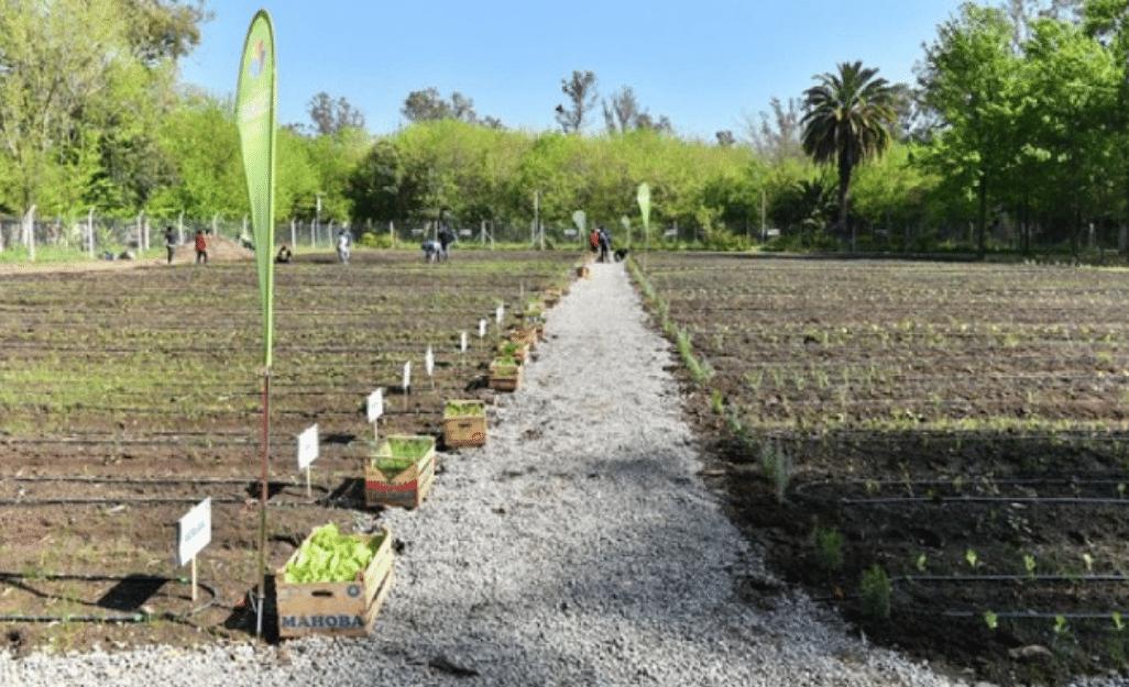 , Crean huerta orgánica municipal: abastecerá a comedores, merenderos y familias