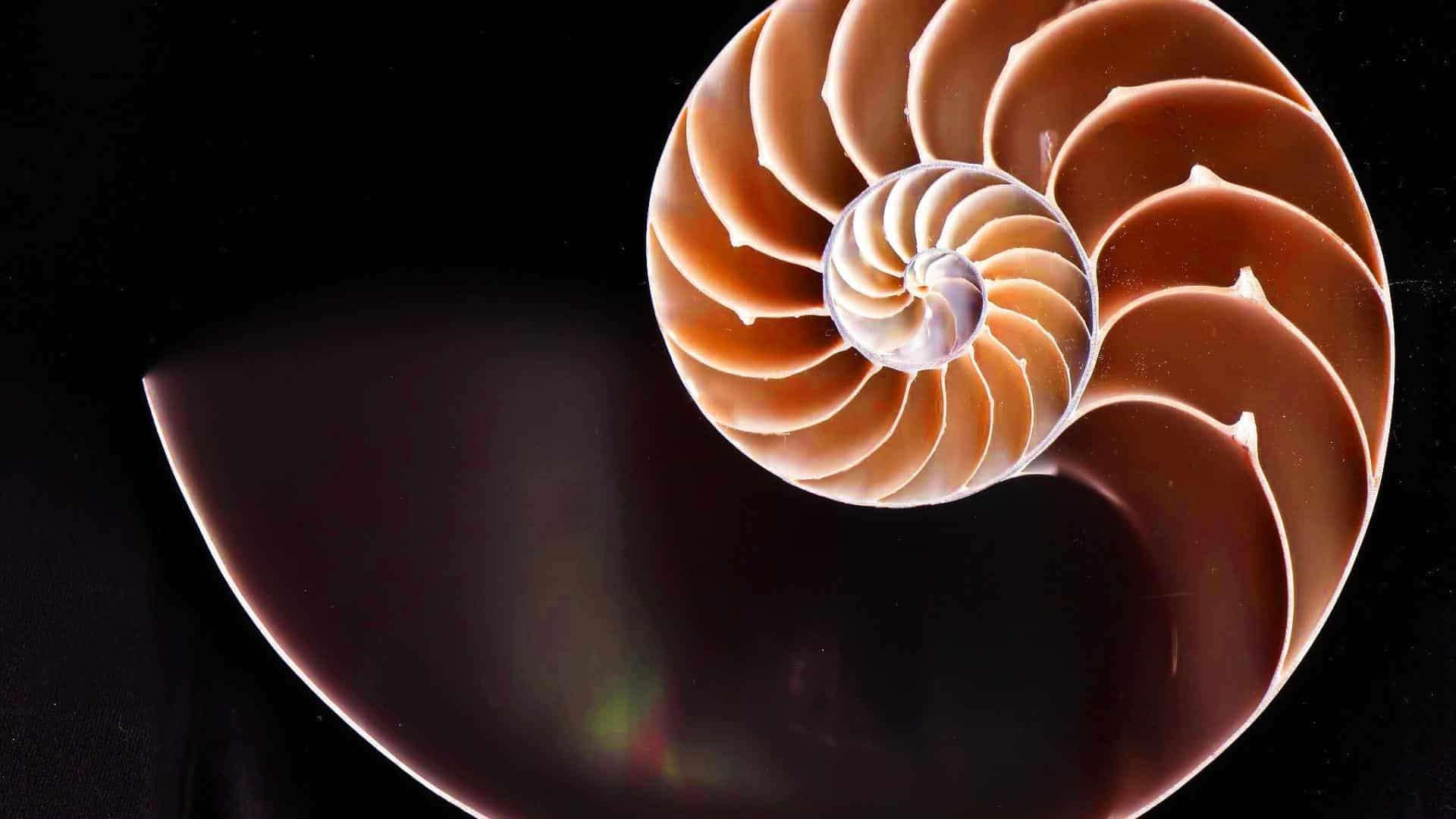 , Holandeses crean turbina eólica en Espiral y es la más eficiente que existe