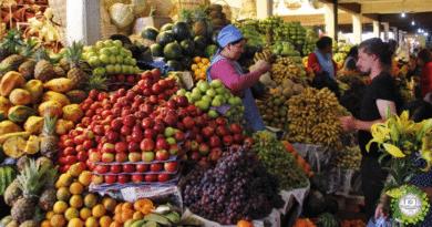 , El camino hacia una dieta vegetariana crearía 19 millones de empleos en América Latina