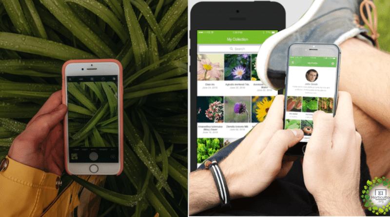 , Las mejores aplicaciones gratuitas de identificación de plantas para que tengas en tu celular