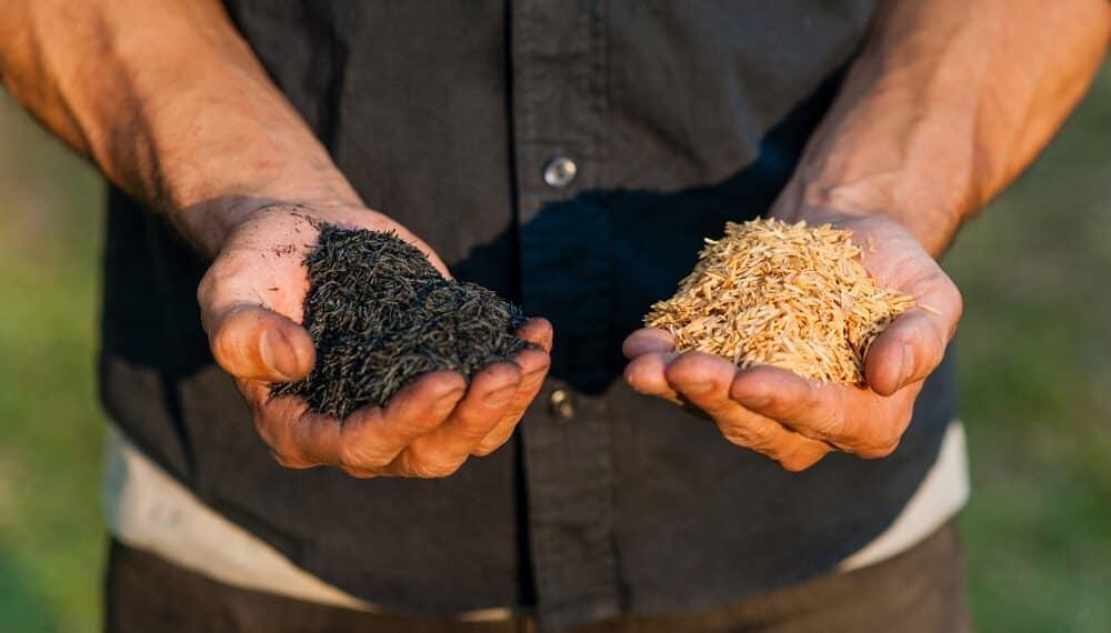 , Argentino crea la primer fábrica de carbón ecológico para evitar la tala de árboles