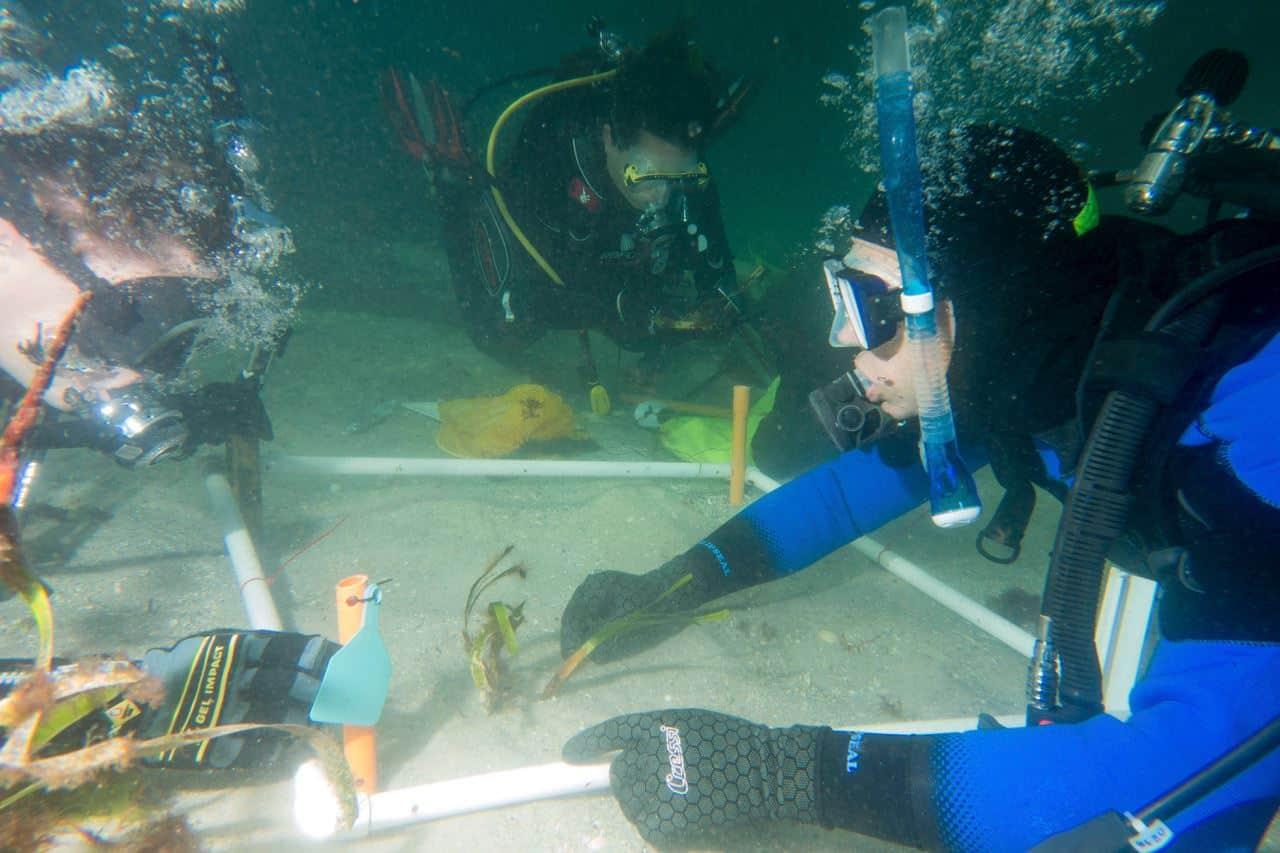 , Científicos Australianos están reforestando nuestros océanos