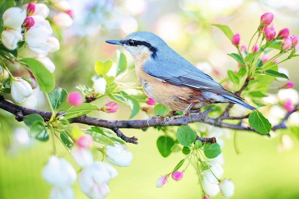 Los índices de biodiversidad de aves y felicidad humana están vinculados