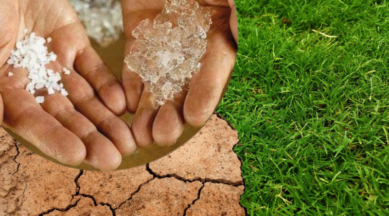 , Agua en polvo, el invento mexicano que puede solucionar las sequías