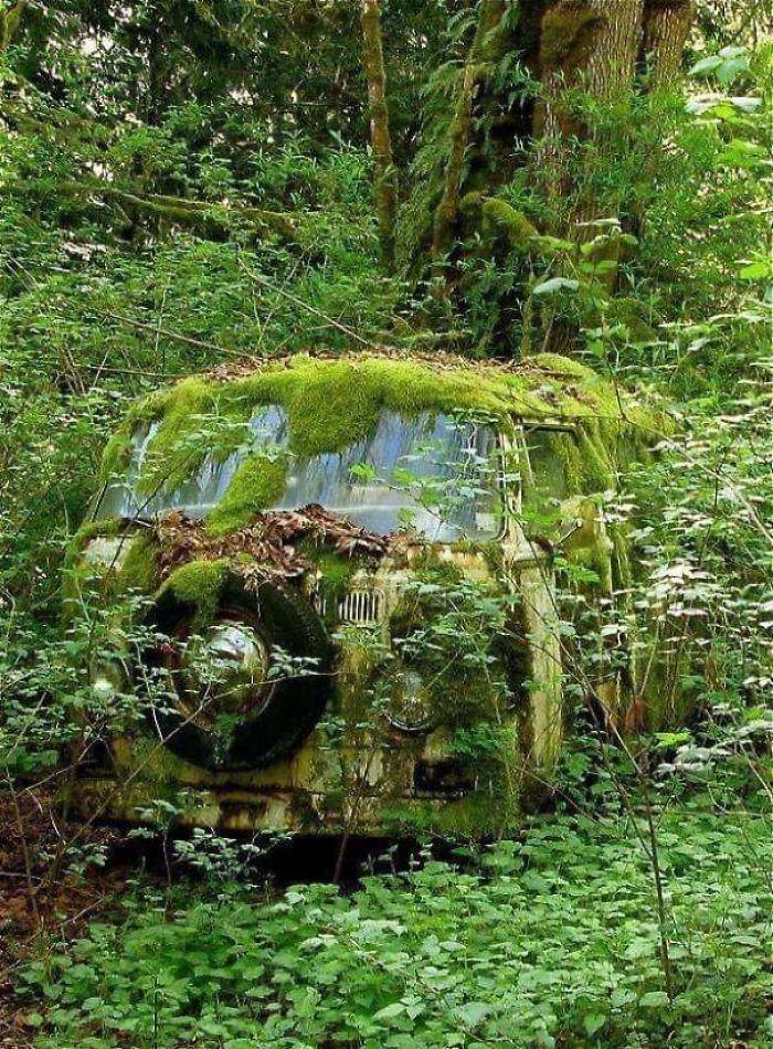 , Mira lo rápido que actúa la naturaleza cuando los humanos la dejan sola