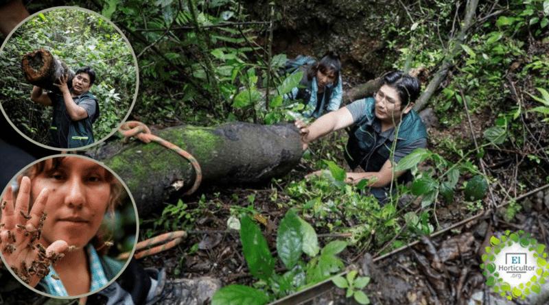 , Pareja boliviana salva a las abejas de la deforestación provocada por los cultivos de coca