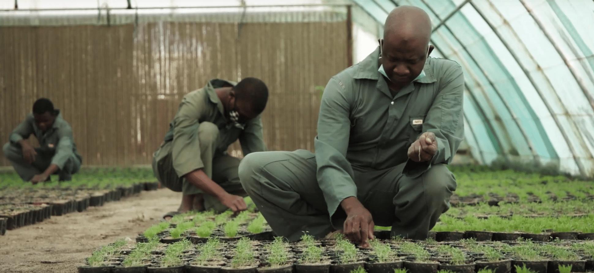 , En este país, te regalan plantas y árboles si reciclás tus plásticos
