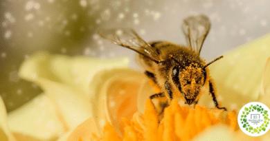 , Estudio Declara que las abejas son el ser vivo más importante de la Tierra