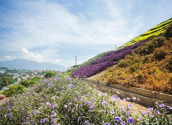 , En colombia transformaron un enorme basural en el mejor jardín de toda la ciudad