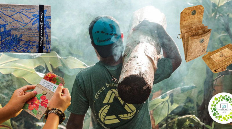 , Joven crea Billeteras ecológicas hechas de Fibra de Plátano