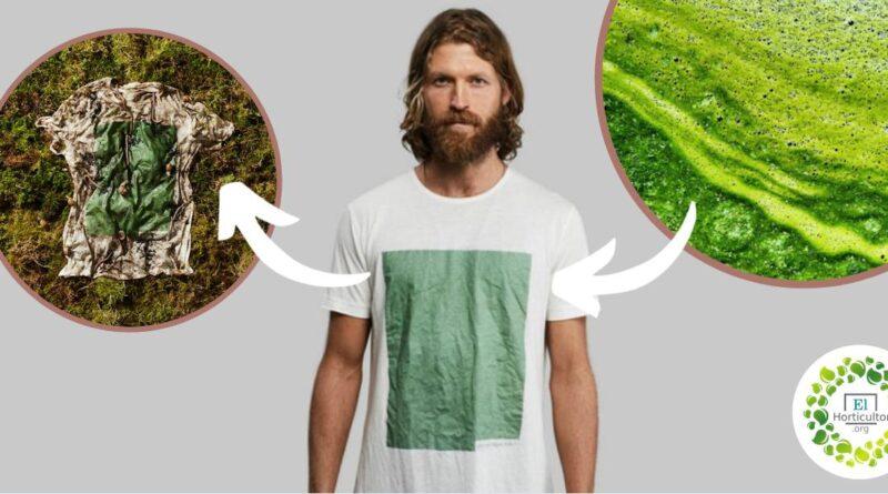 , Estas Camisetas hechas de algas fertilizan la tierra al terminar su vida útil