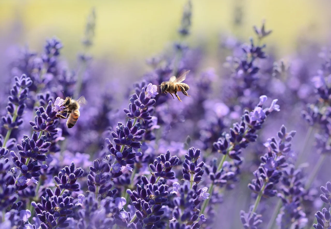 , Crean máscaras biodegradables que luego de su uso se convertirán en Flores para abejas