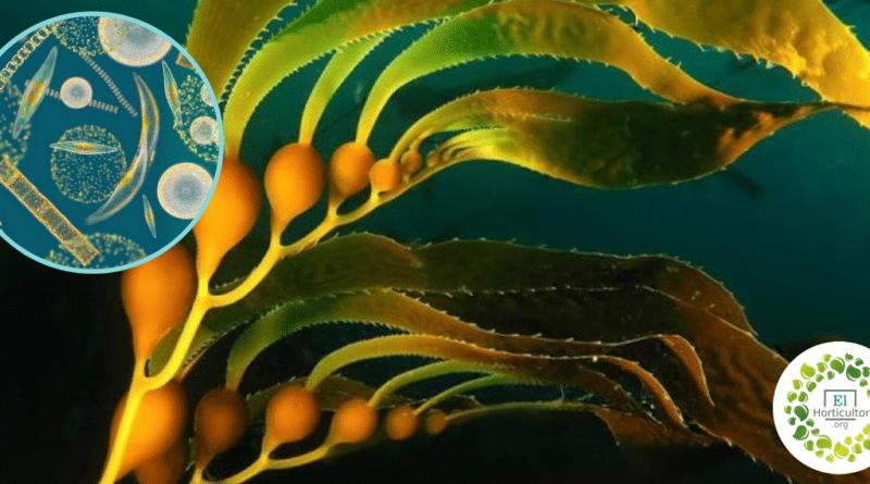 , Científicos estiman que el 70% de la producción de oxígeno en la Tierra proviene del océano