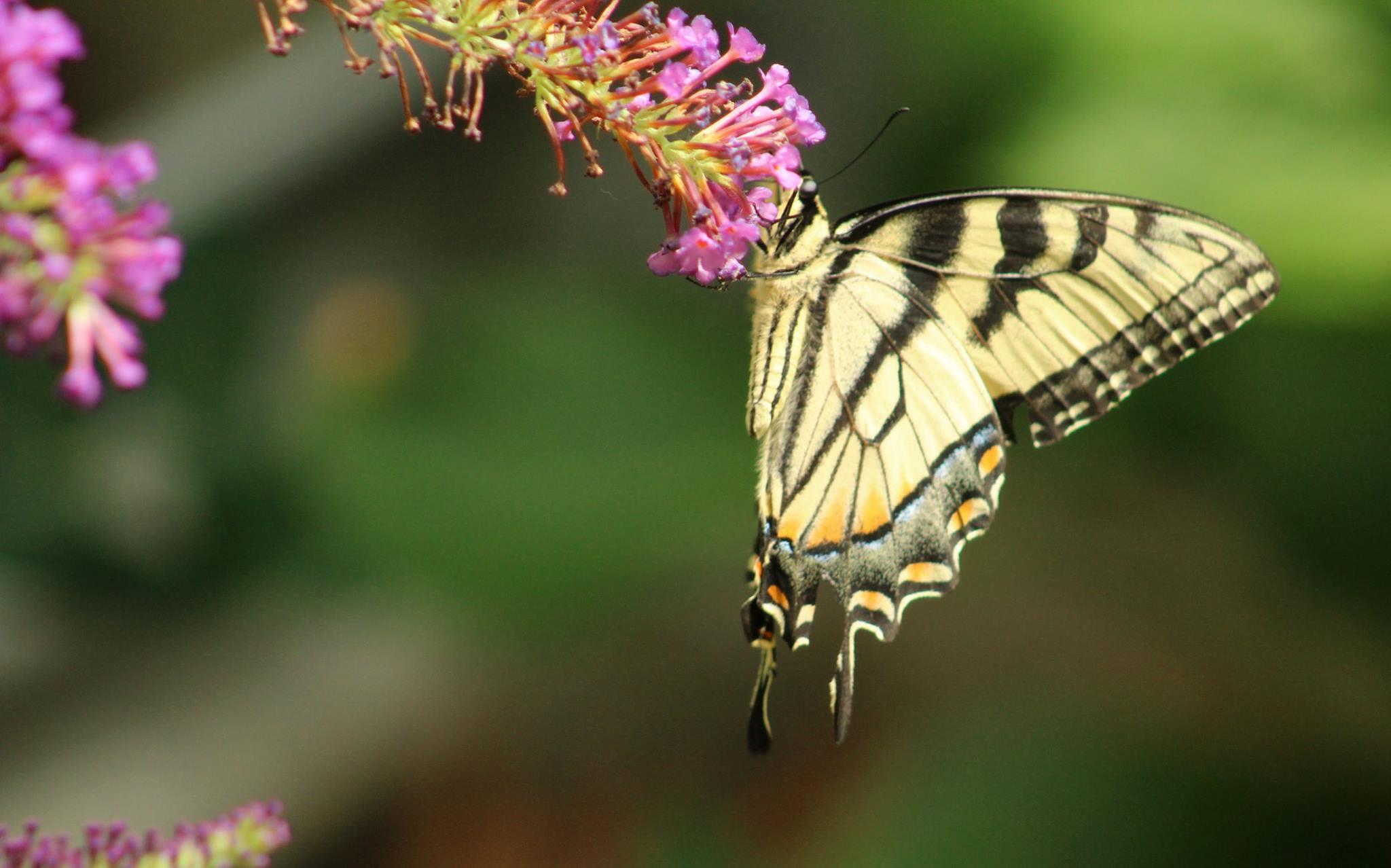 , 1 millón de jardineros plantan flores y crean una red global para salvar a las abejas