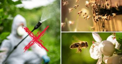 , Union Europea propone reducir el uso de neonicotinoides en favor de la salud de las abejas