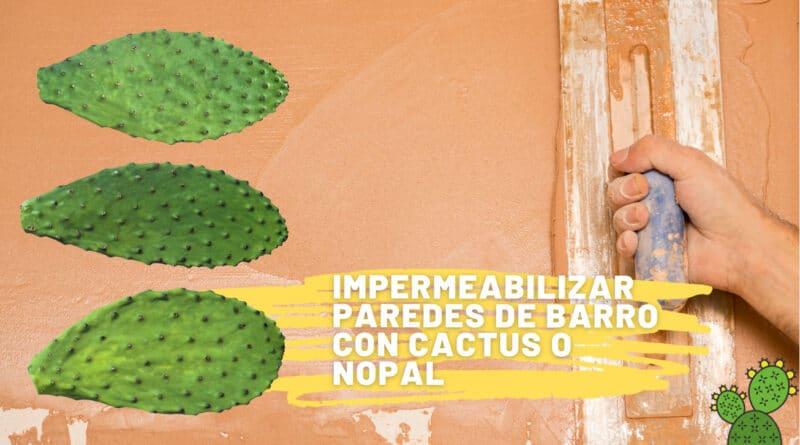 , Cómo impermeabilizar paredes de barro con cactus o nopal