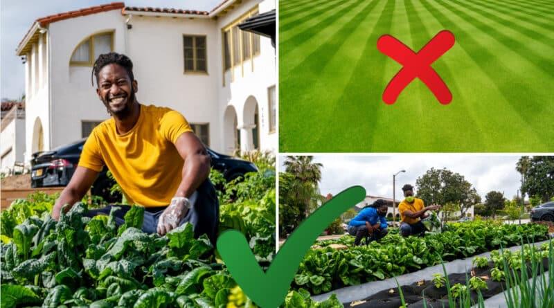 , Startup utiliza espacios de césped de las casas para cultivar alimentos orgánicos locales con estética de paisajismo