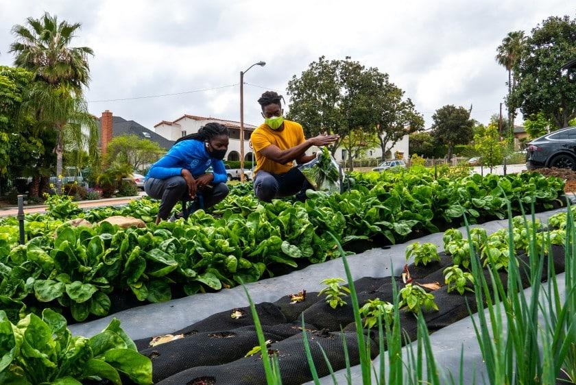 Startup utiliza espacios de césped de las casas para sembrar cultivos orgánicos locales con estética de paisajismo
