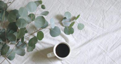 , Té de eucalipto, para qué sirve y cómo se prepara