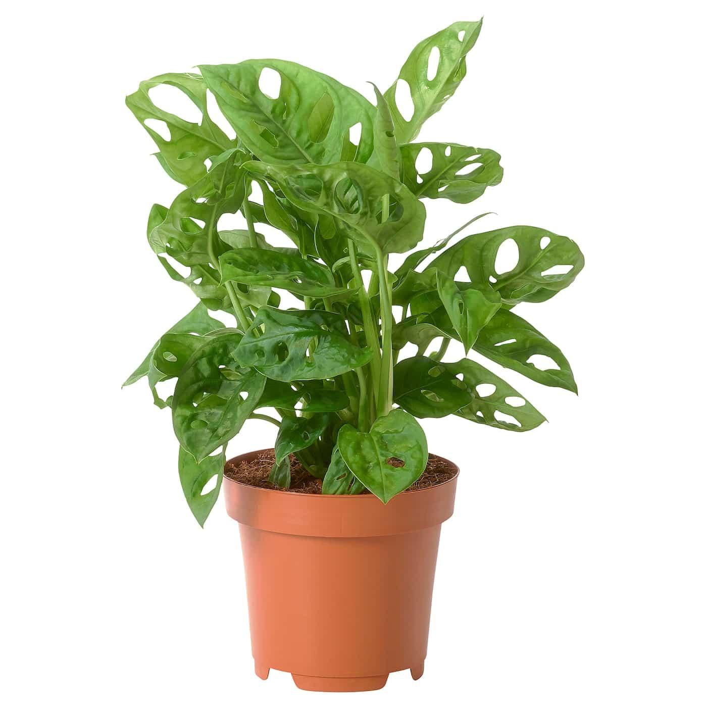 Plantas de interior que requieren poca luz para sobrevivir