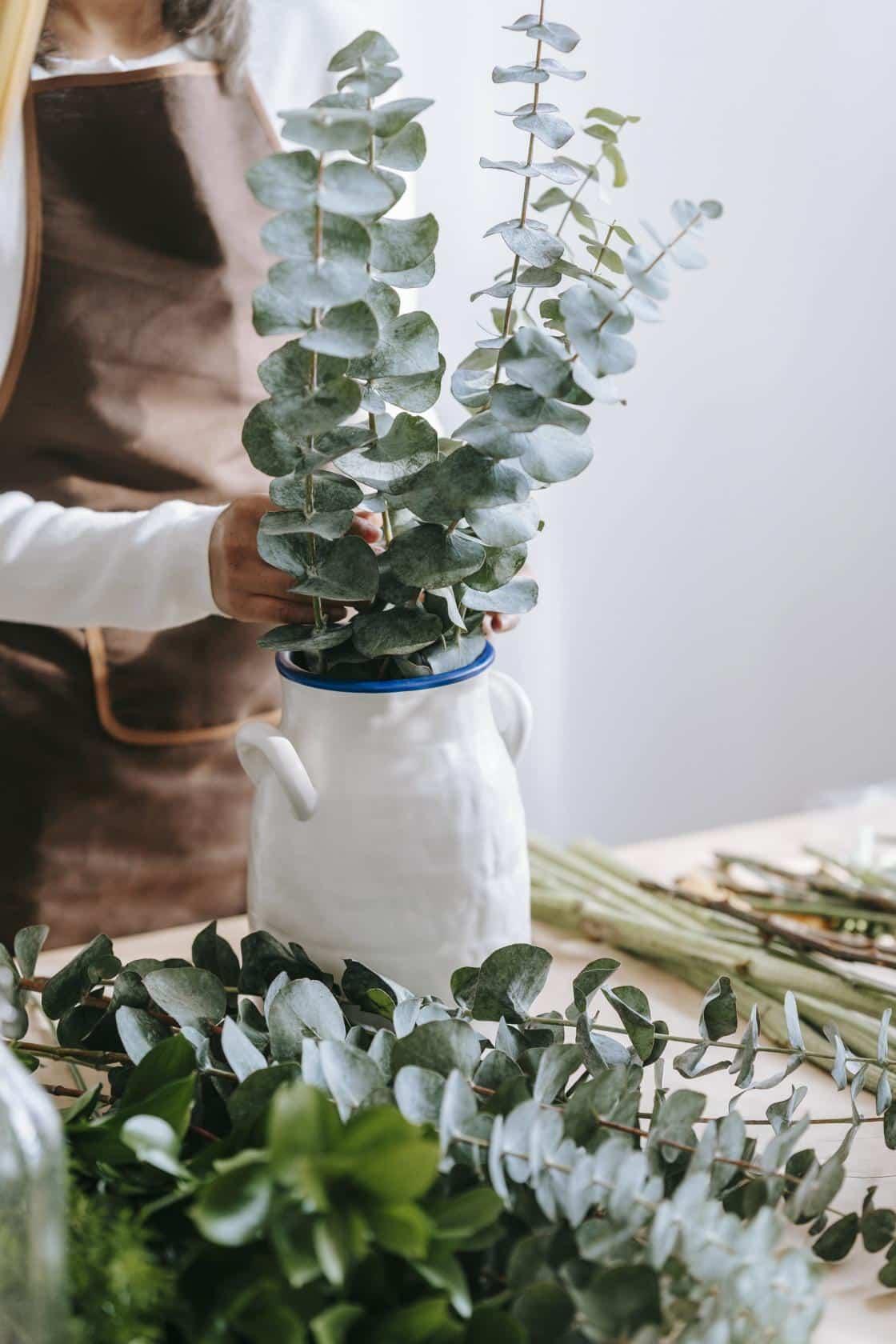 Té de eucalipto, para qué sirve y cómo se prepara