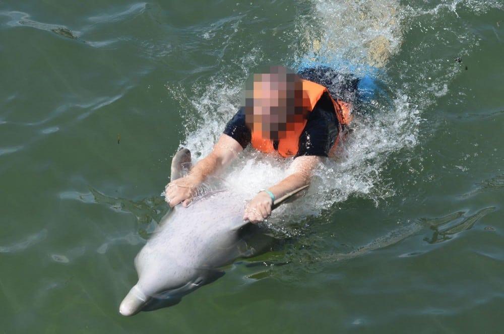 , ¡Canada prohíbe el cautiverio de ballenas, delfines y marsopas!