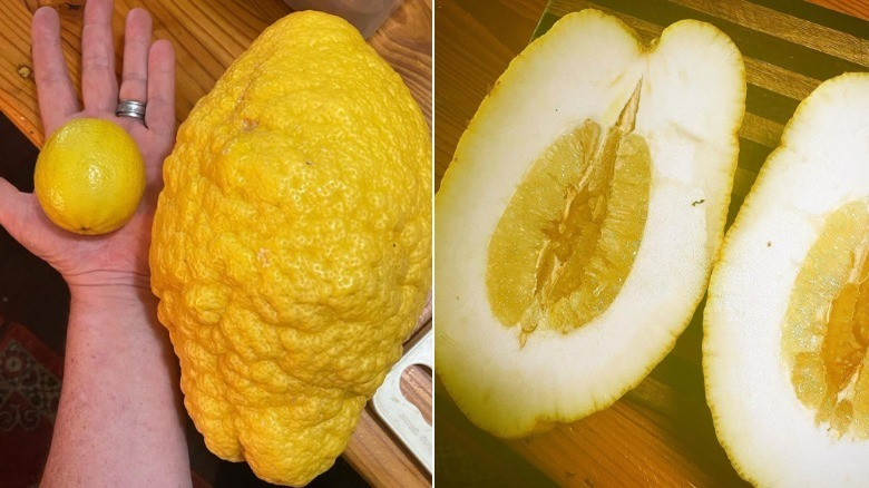 Pareja cultiva un limón gigante con un peso de 2,6 kg en Australia